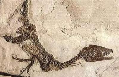 fossile di dinosauro ok