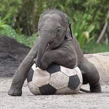 elefante giardino zoologico
