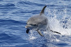 delfinomarelibero