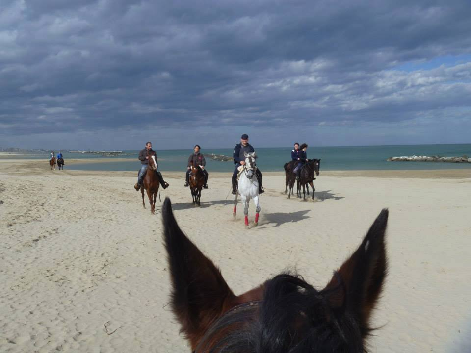 cavallo_spiaggiarimini