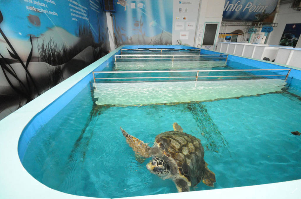 Riccione, Fondazione Cetacea: l'ospedale per tartarughe